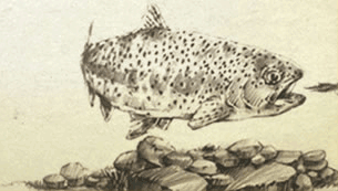 Escatawba Farms Fly Fishing in western Virginia Mountains fish